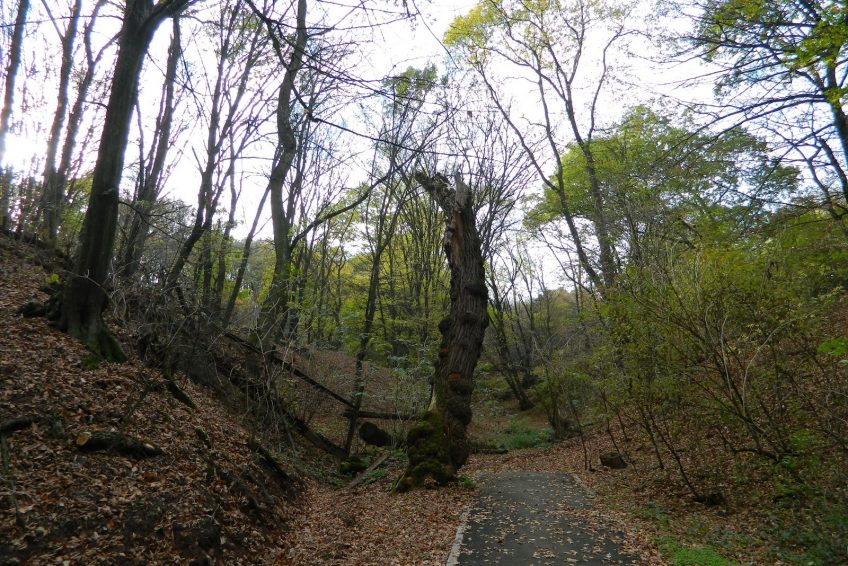 Parcul Dendrologic Dr Ioan Vlad Informatii Romania